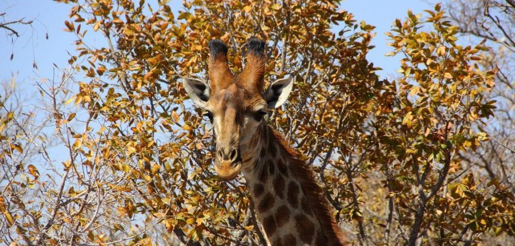 Für eine Safari reicht ein Touristenvisum aus