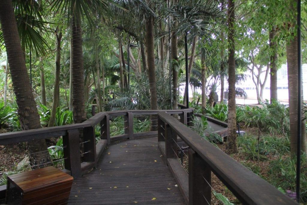 Brisbane Rainforest Walk