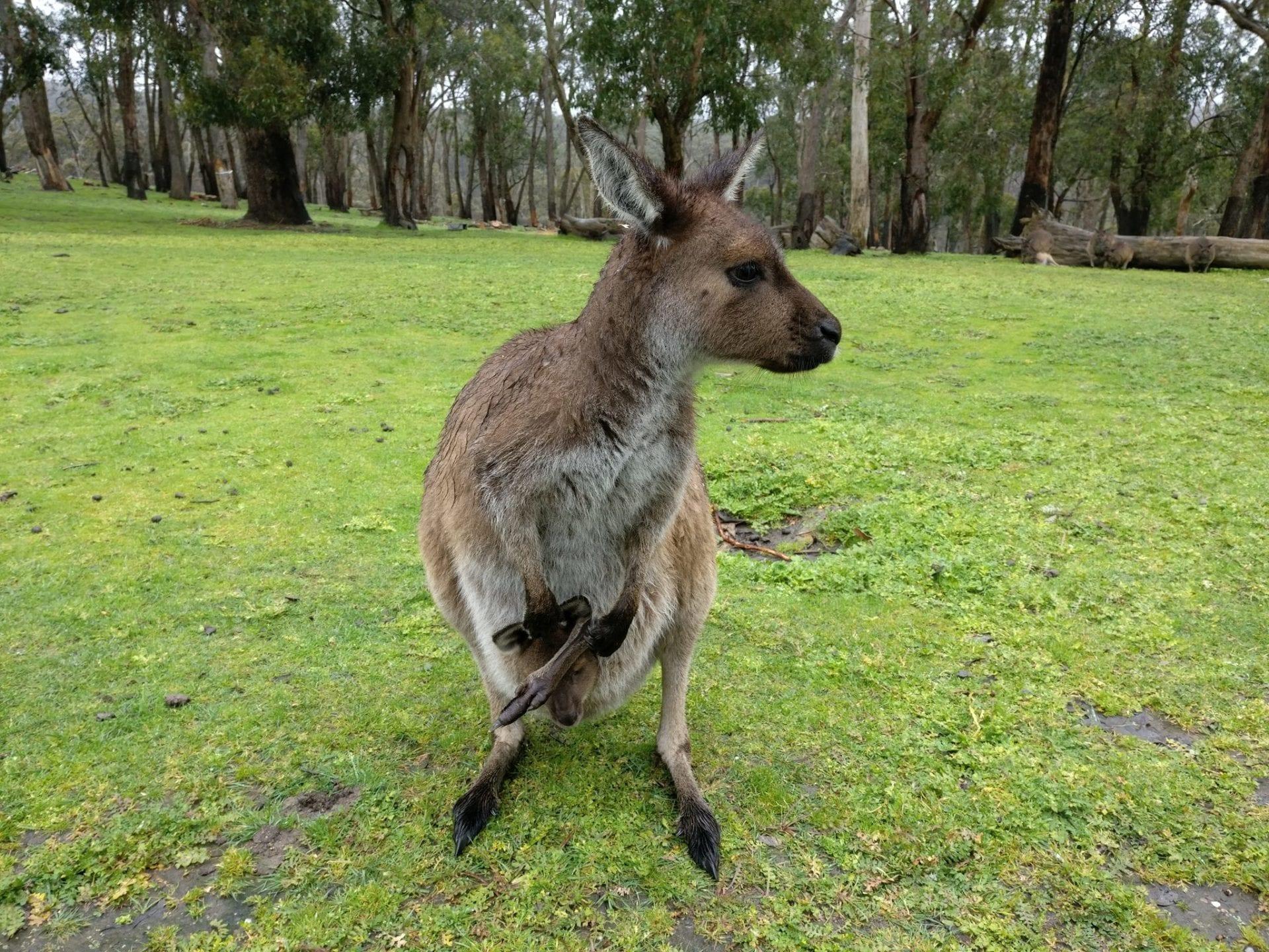 Gleland Park Adelaide