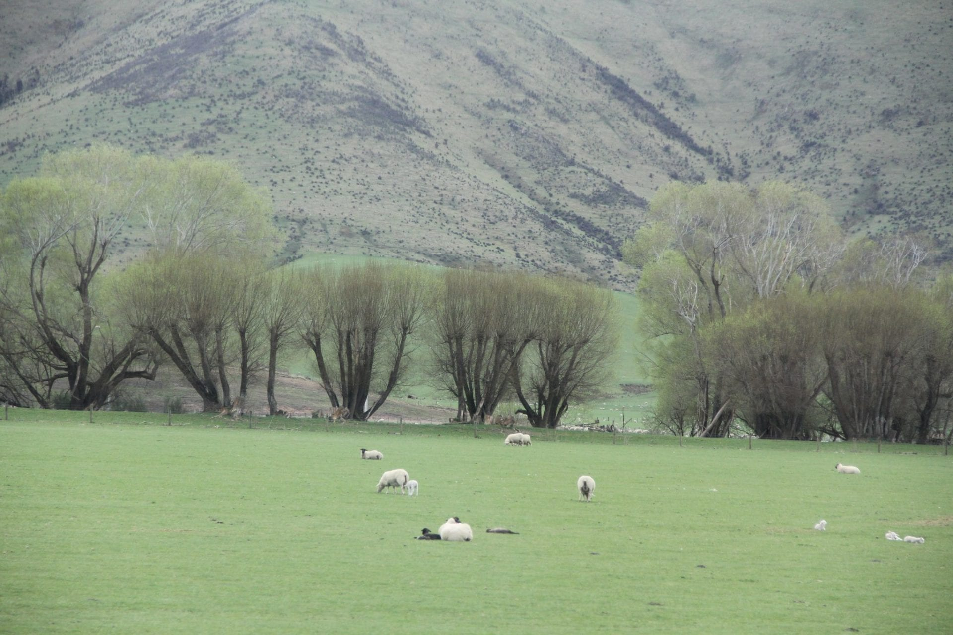 Highway Number Six Sheeps