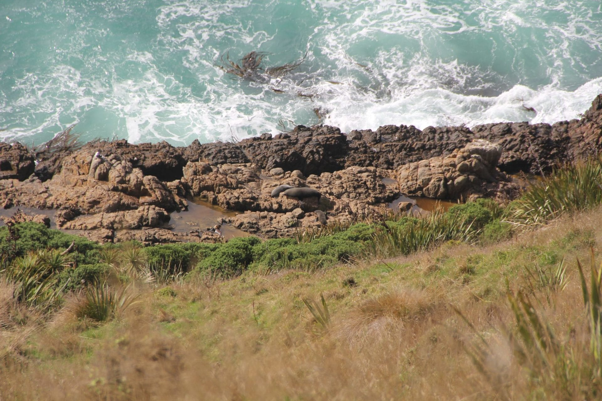 Southern Scenic Route Nugget Point Sealions