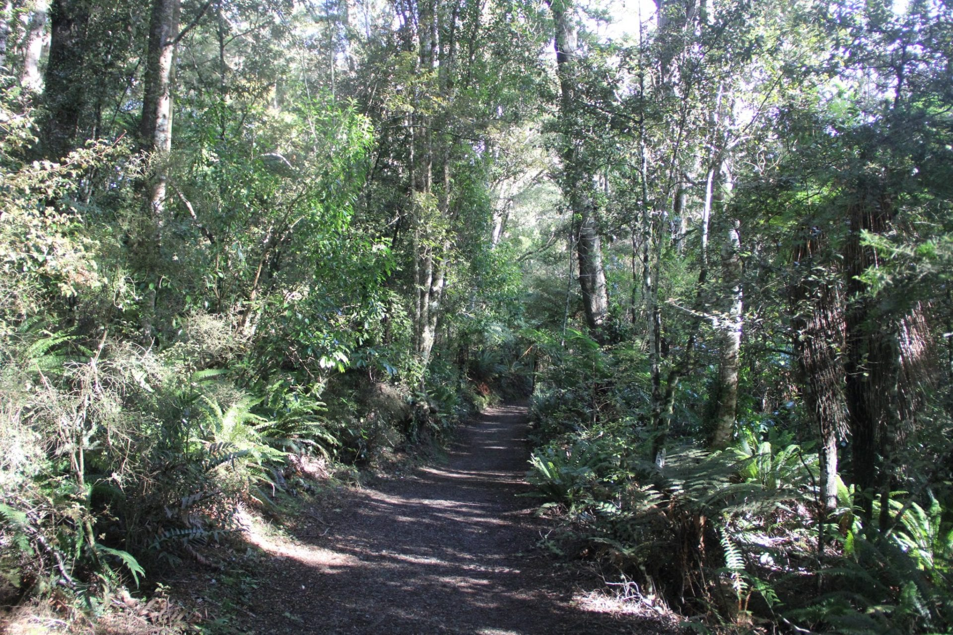 Southern Scenic Route Purakanui Forest