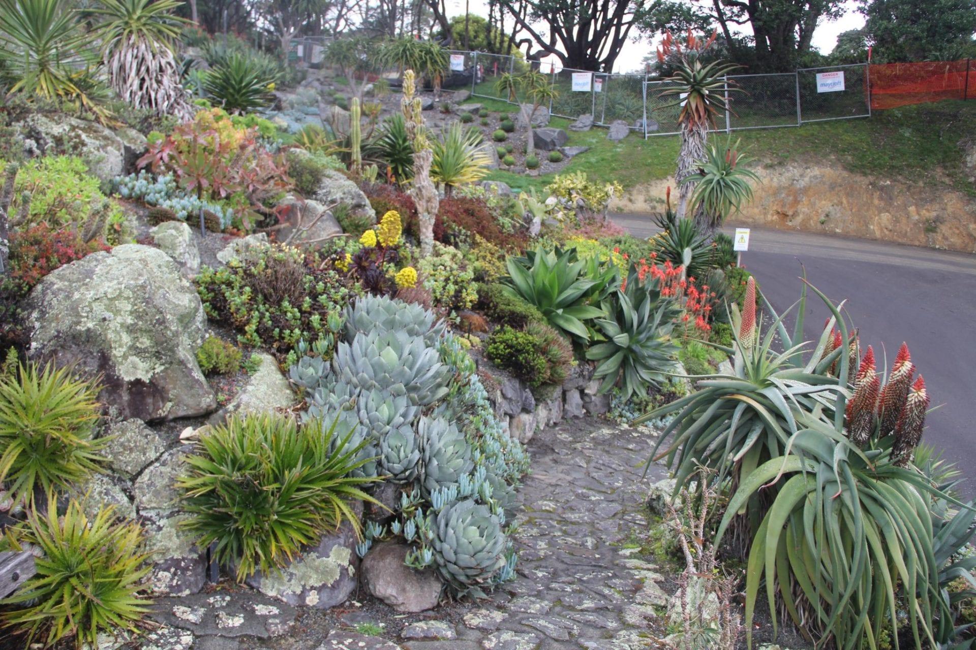 Wellington Botanical Garden 4