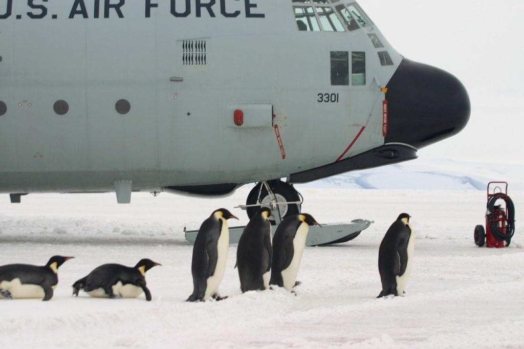 Flugzeug Schnee Pinguin
