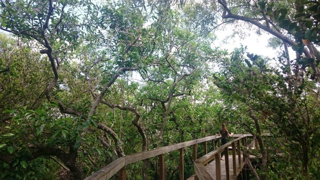 everglades national park indianer dorf ewg