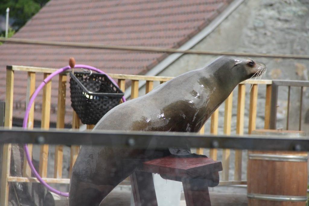 Bergen Aquarium 2