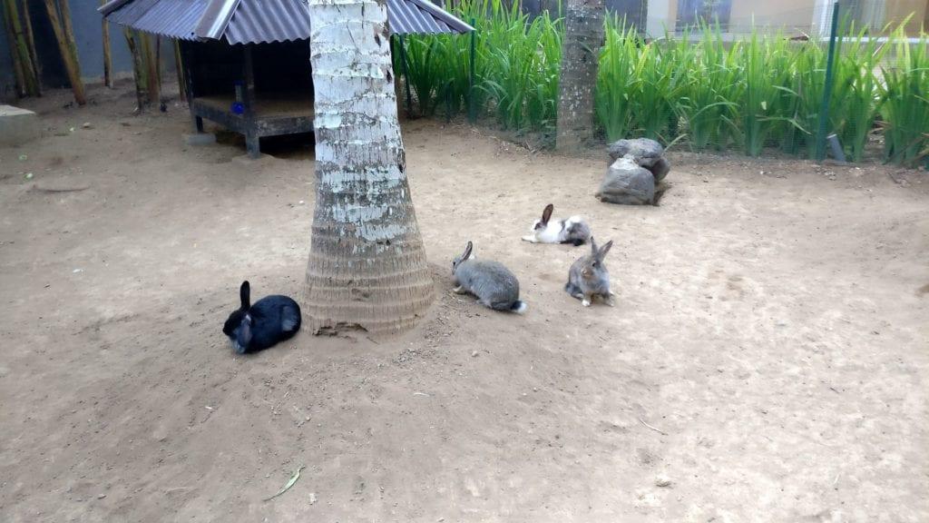 Mercure Bali Nusa Dua Hasen