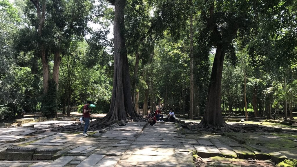 Angkro Wat Ta Prohm Bäume