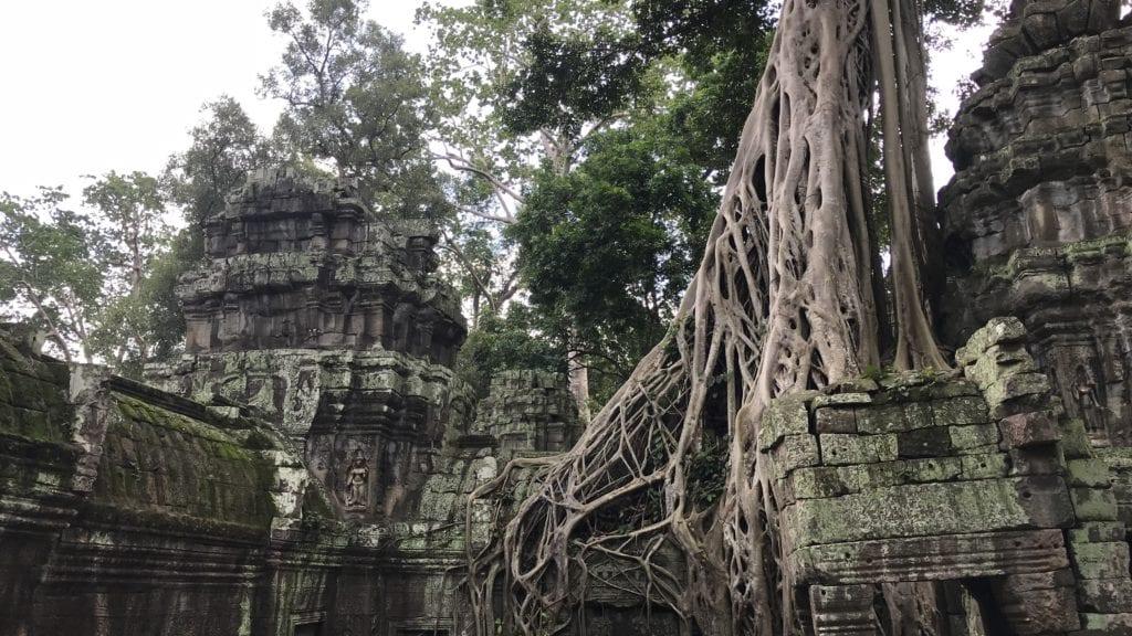 Angkro Wat Ta Prohm Ranken Über Der Tür 3