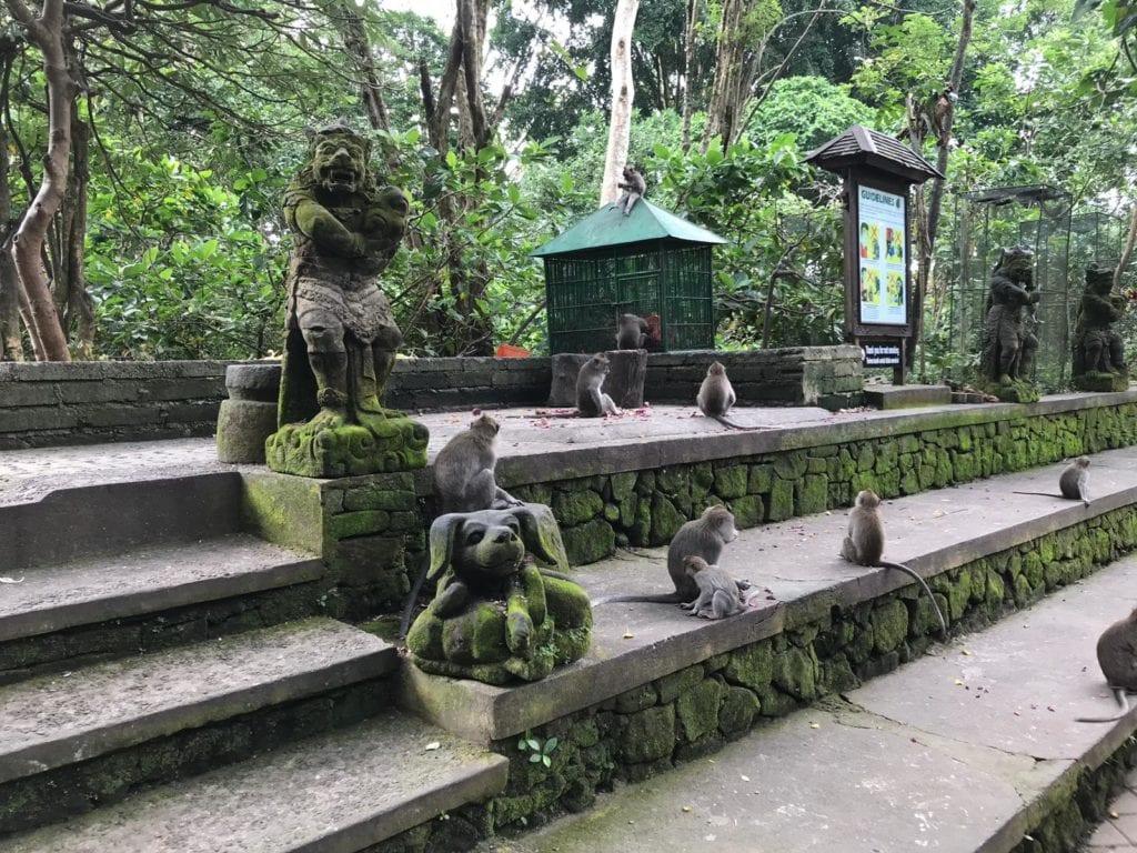 Bali Ubud Monkeys Park