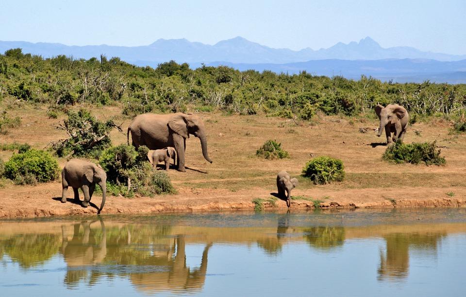 Südafrika Krüger