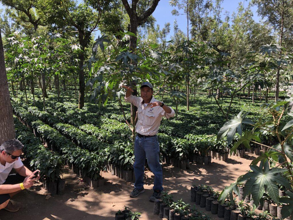 Kaffeetour Antigua Guatemala