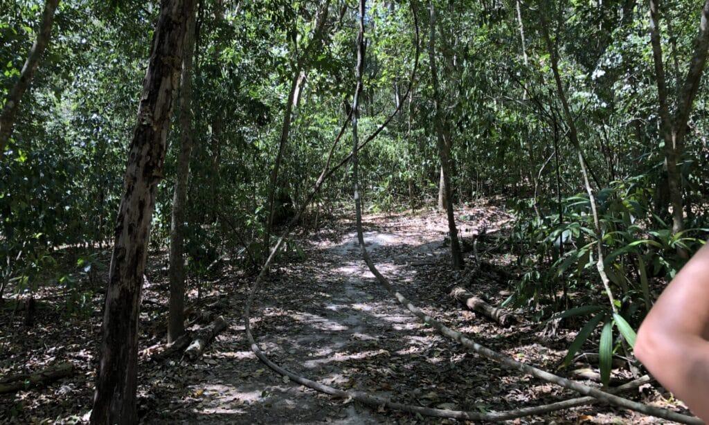Tikal Dschungel