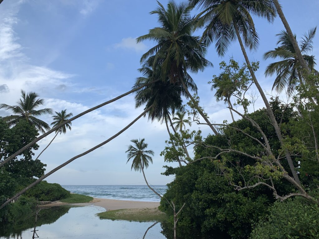 Anantara Peace Haven Tangalle Resort Palmen