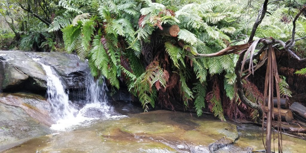 Blue Mountains National Park 6