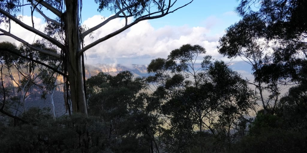 Blue Mountains National Park 7