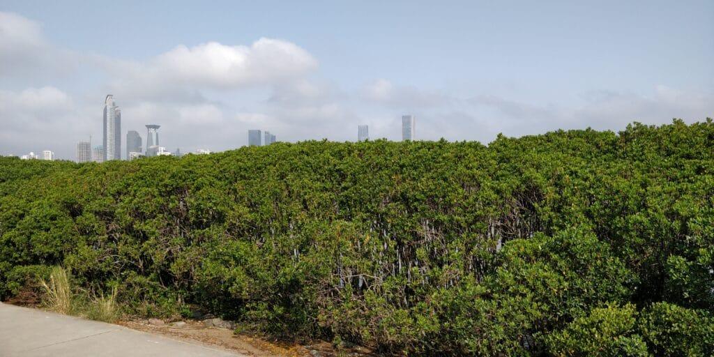 Shenzhen Coastal Ecological Park 3