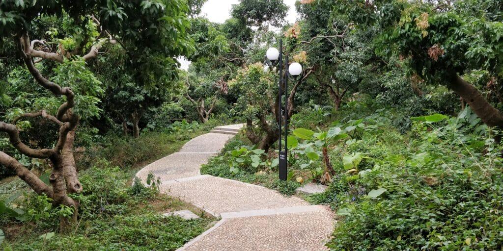 Shenzhen Lianhuashan Park 4