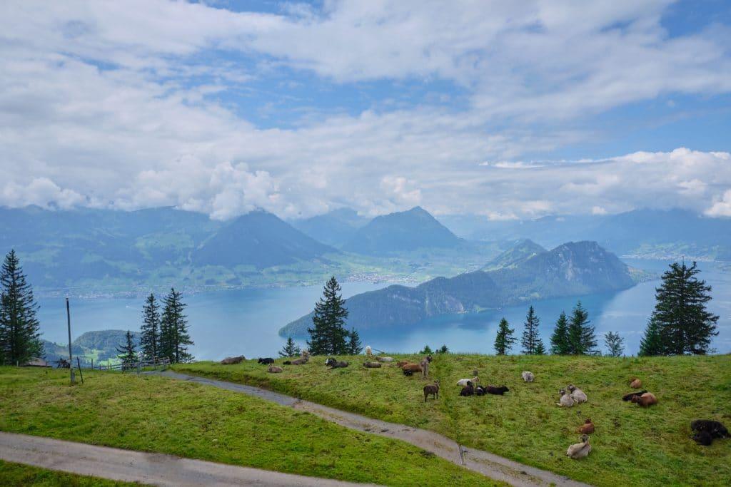 Schweiz Wandern Rigi