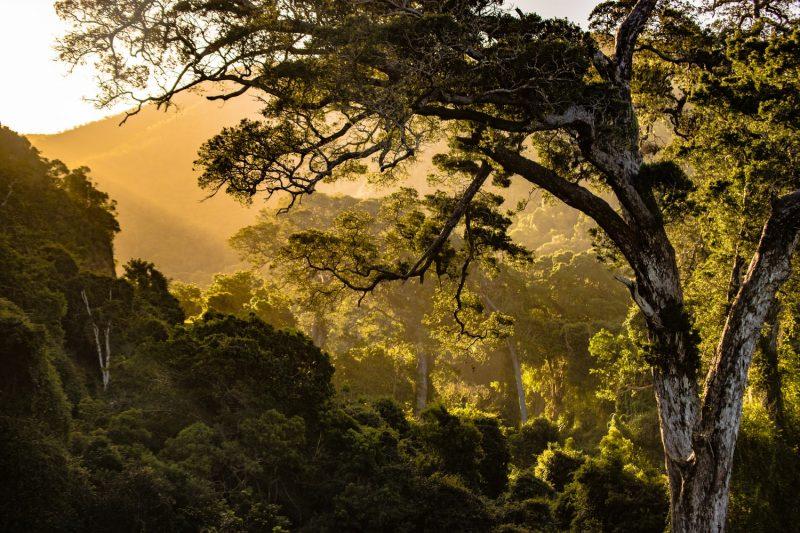 Südafrika Natur