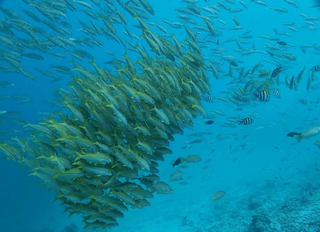 Tauchen Sansibar 3