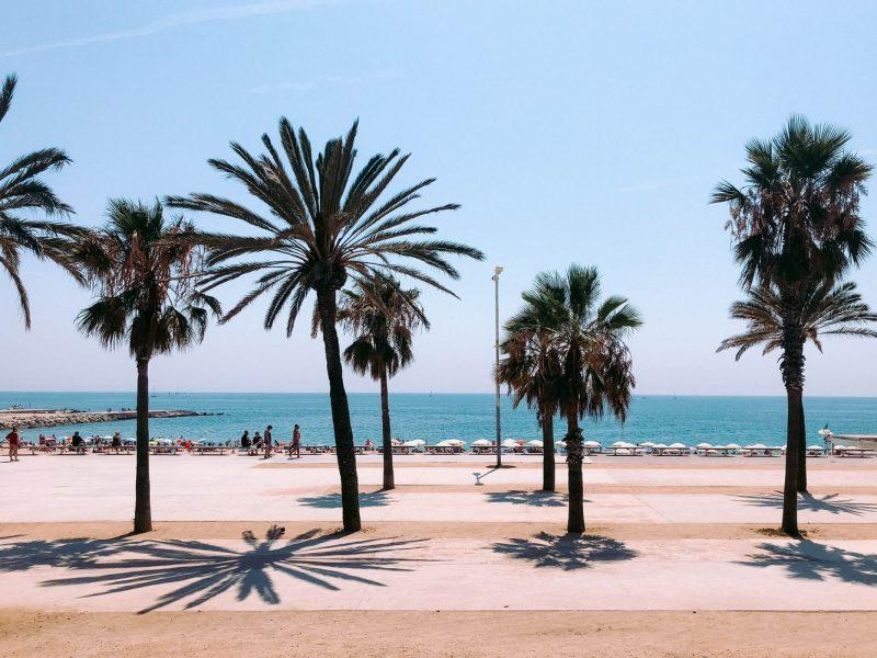 Barcelona Spanien Promenade Palmen