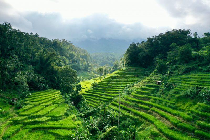 Bali-indonesien-reisfeld