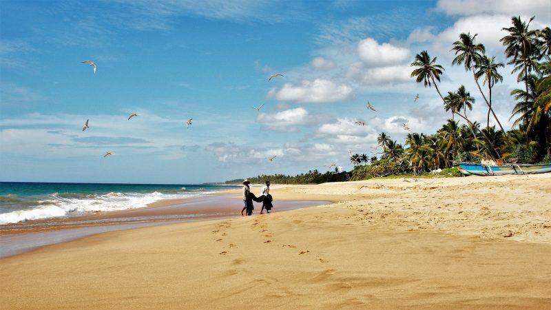 Palmenstrand, Sri Lanka