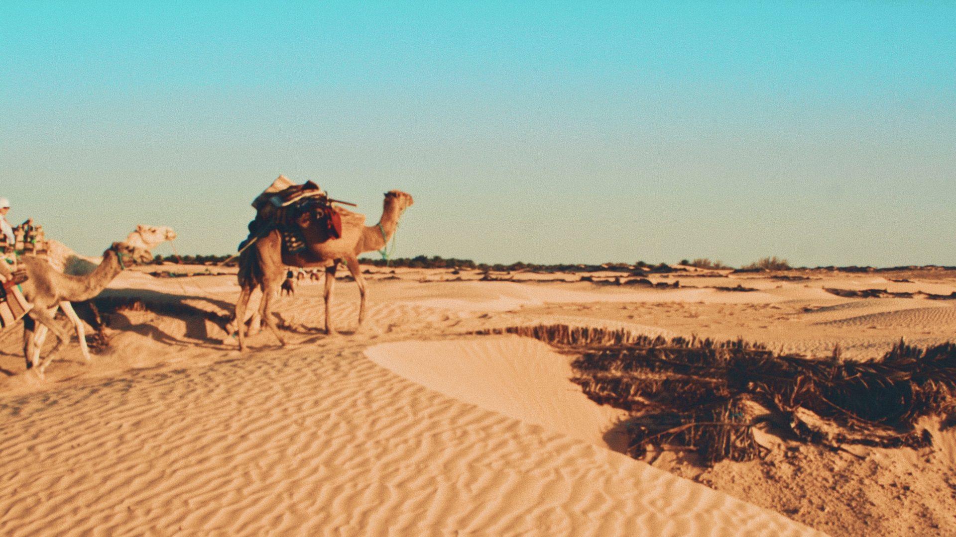 Tunesien-Keine-Quarant-ne-f-r-Pauschaltouristen