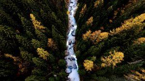 Herbstwald Schweiz